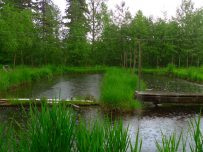spring-rains-on-the-recirculating-ponds